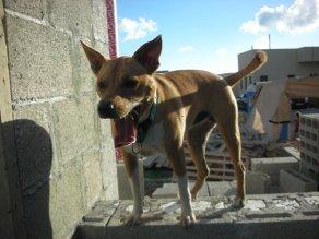 כלבה על אדן החלון