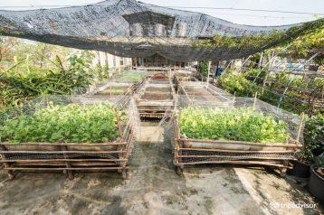 garden--v2428013