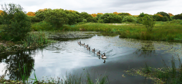 little-barn-pond_cs_gallery_preview