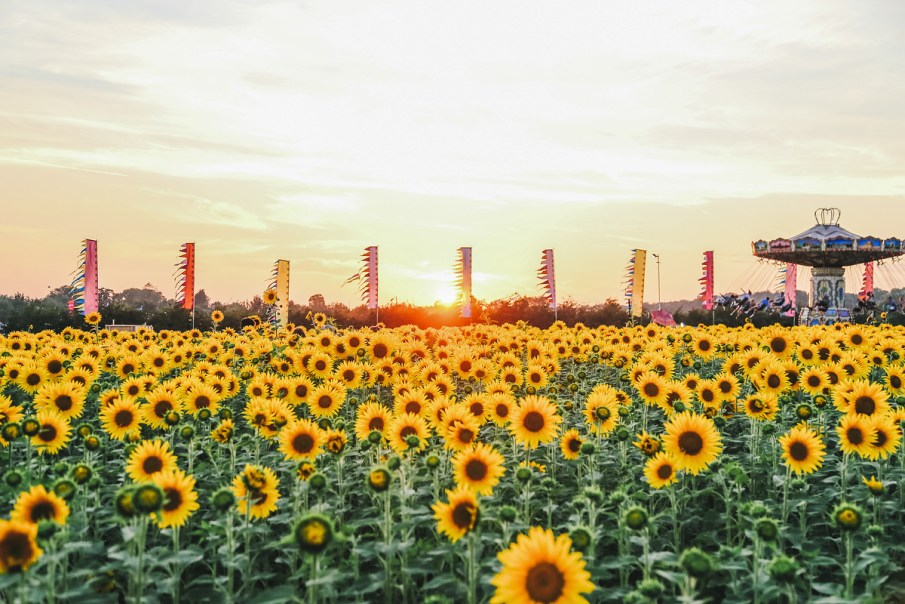 the_sunflower_field15_web_usage