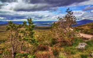 through_the_trees_cairngorm_national_park_scotland_by_raiden316-d5t890w