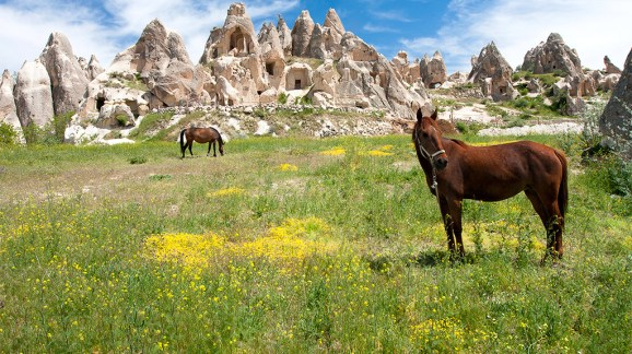 horseback-riding_ss_001