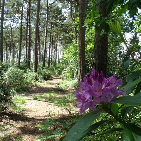 woodland-walk-burnbake-campsite-dorset
