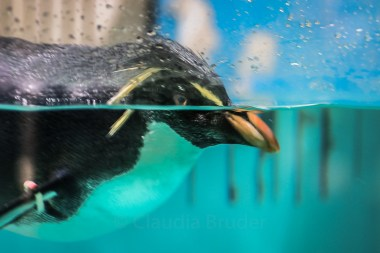 penguin_wet