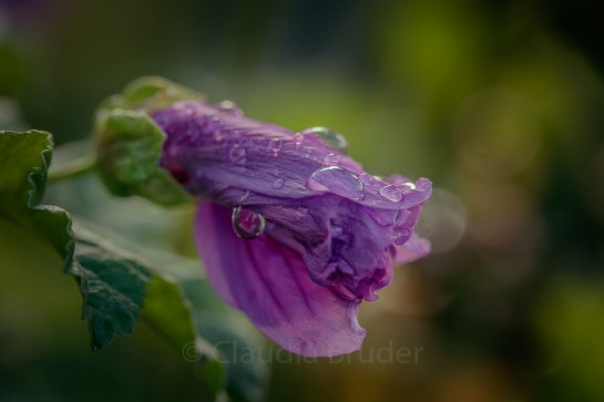 wet_flower