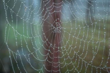 wet_spiders web