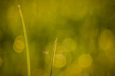 same_different_little spider
