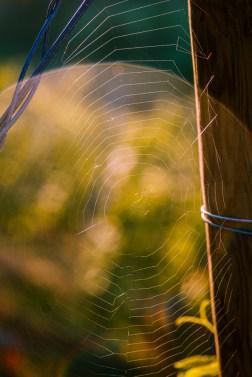 shine_web_4