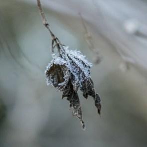 the-road-taken_winter-surprise