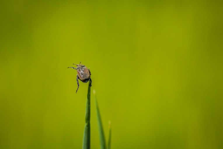 beetle on the top_2