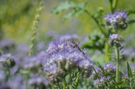 focus_bee on plant