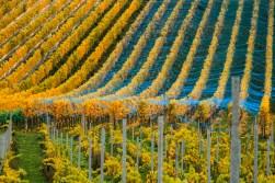 order_vineyard