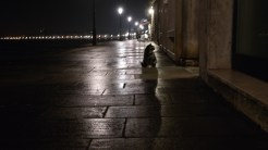 First night in Venice and I'm already finding all the stay cats.