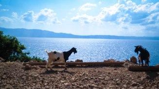 solocosebelleabroad_goatcrossing_greece