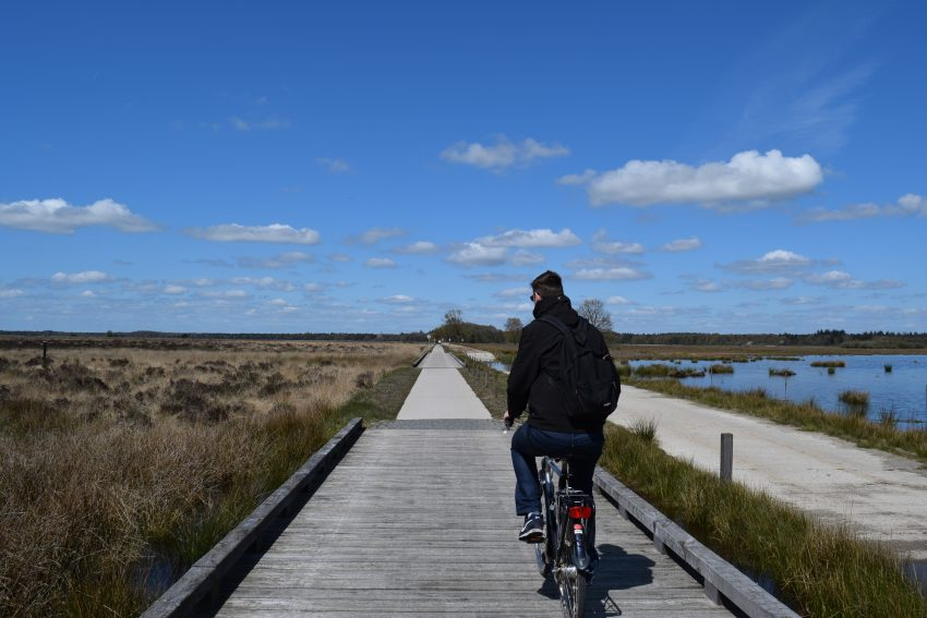 Weekend at Dwingelderveld National Park cycling through the park on one of our routes