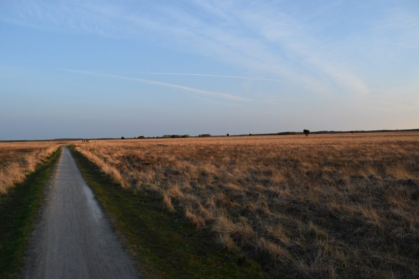 Weekend at Dwingelderveld National Park during sunset