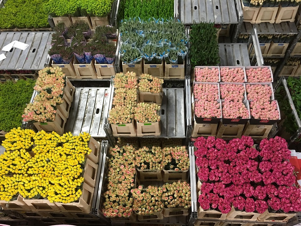 Tulips In The Netherlands - Flower auction in Aalsmeer