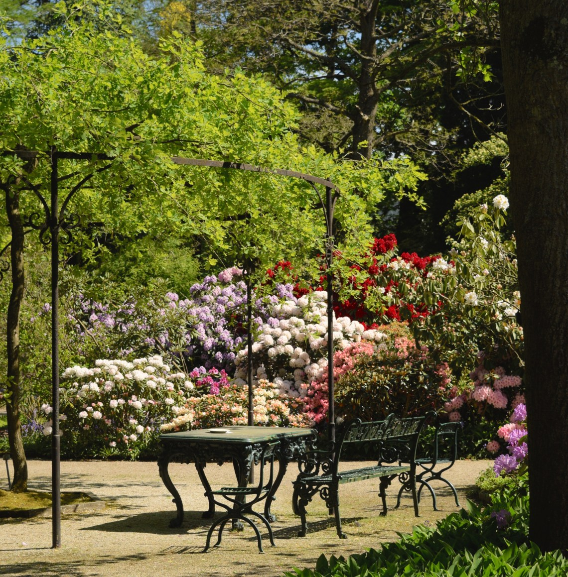 Trompenburg botanical garden Rotterdam togetherintransit.nl Rotterdam Kralingen