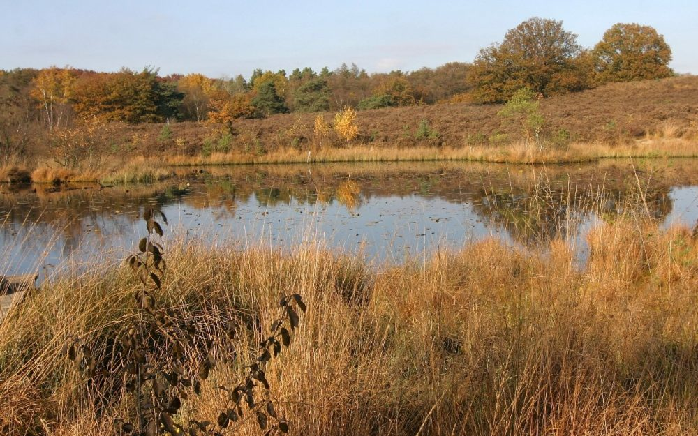National Parks of the Netherlands - Meinweg in the autumn
