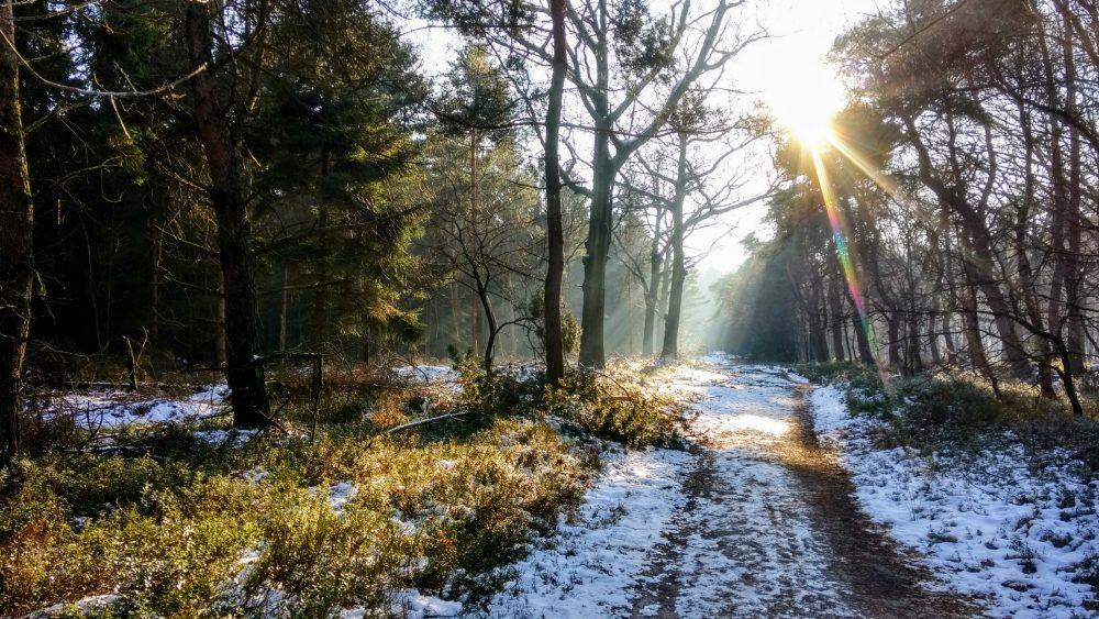 National Parks of the Netherlands- Sallandse Heuvelrug National park