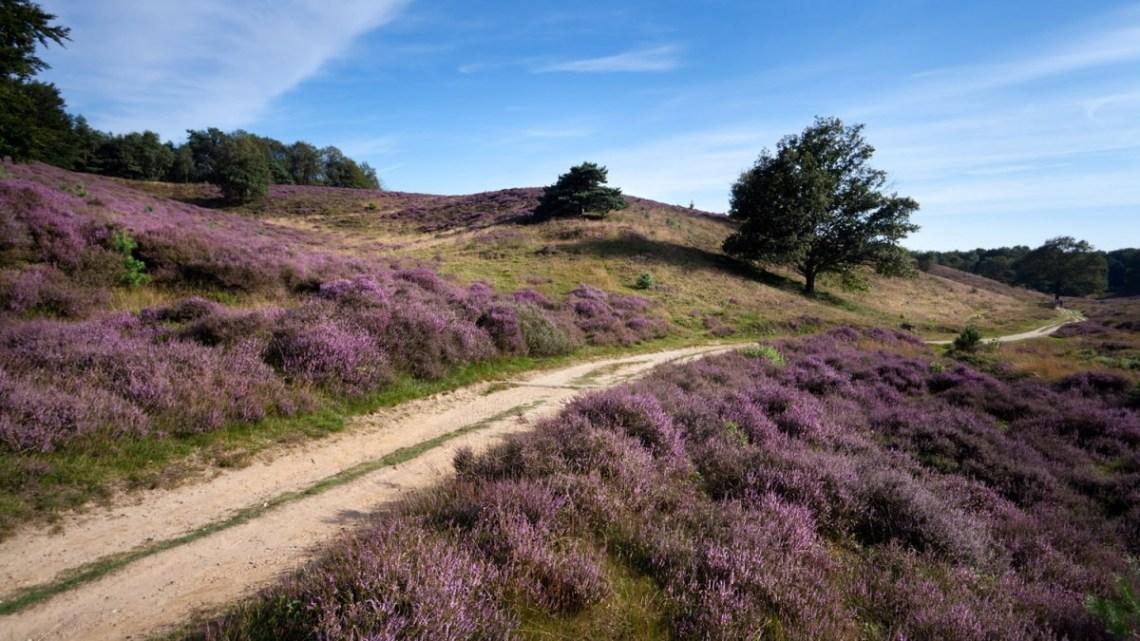National Parks of the Netherlands - De Maasduinen