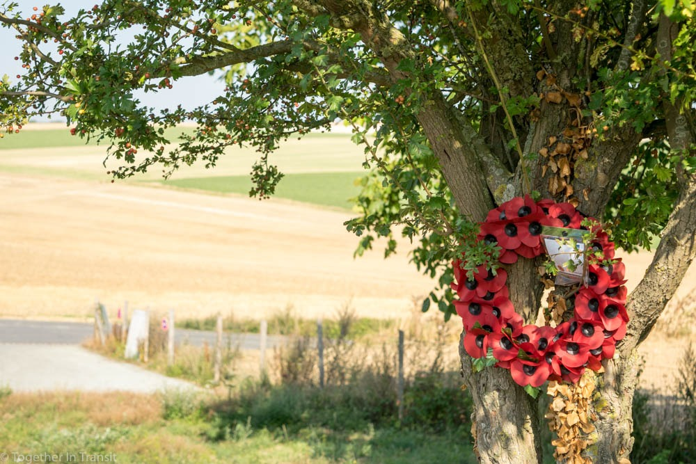 Poppies on a tree in Albert, France for WW1.
