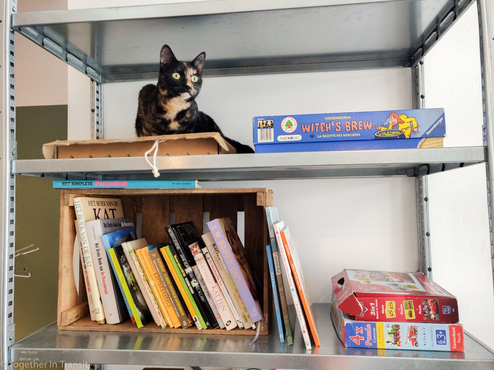 One of the cats sitting near the books and board games