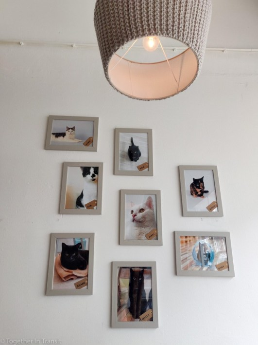 All of the 8 cats at the Cat Cafe
