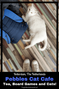 Pebbles Cat Cafe is Rotterdam's 1st Cat Cafe paradise that is open to the public! Reserve your spot for a cup of tea, play some board games and enjoy the company of the cats they have! #rotterdam #catcafe