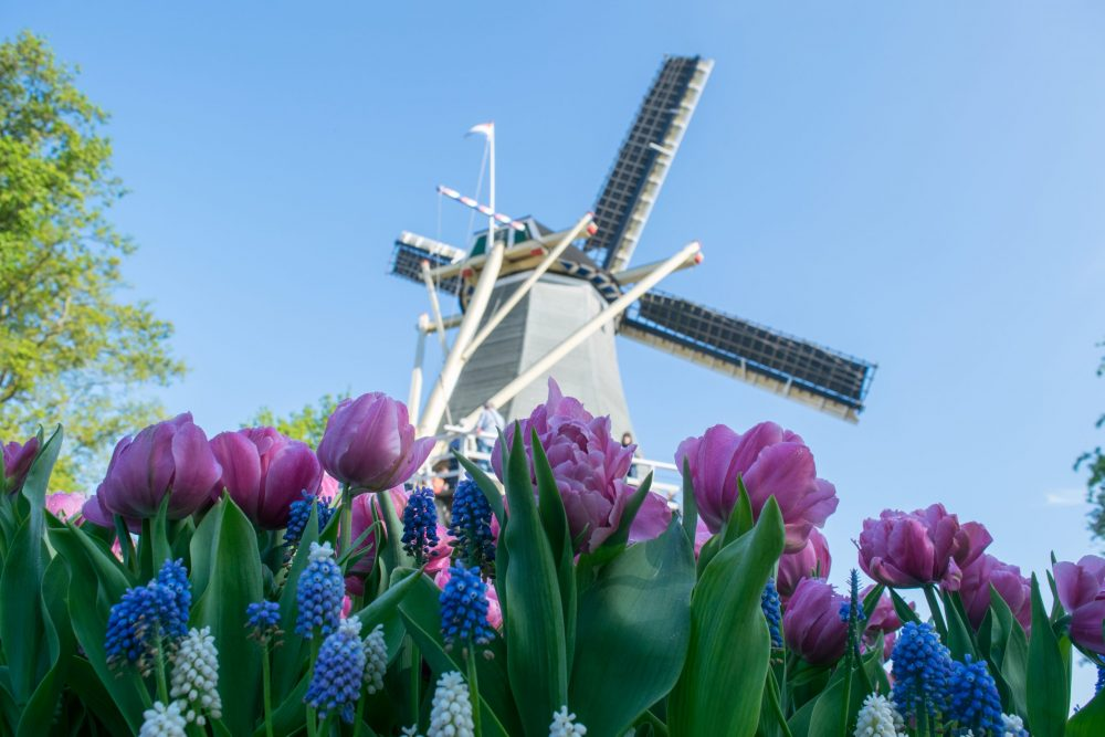 Windmills in the Netherlands - togetherintransit.nl