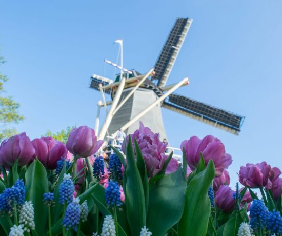 Windmills in the Netherlands - togetherintransit.nl