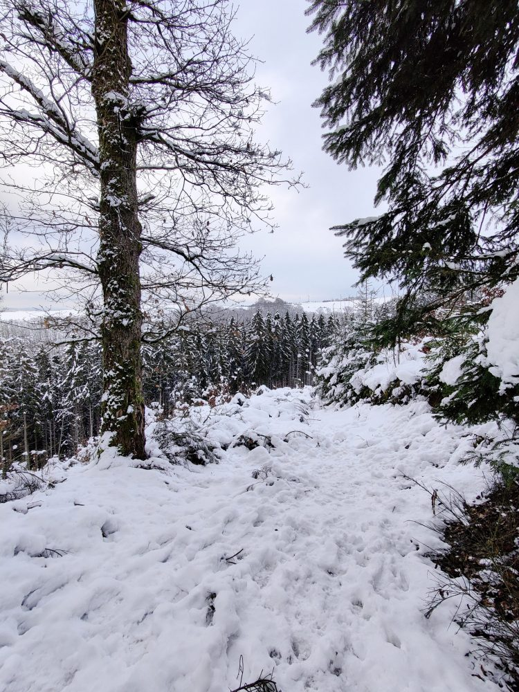 The forest in the snow in Luxembourg