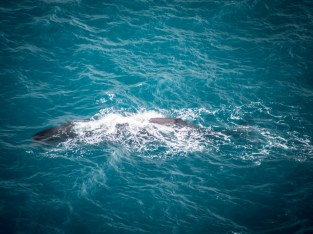 Sperm Whale from the air