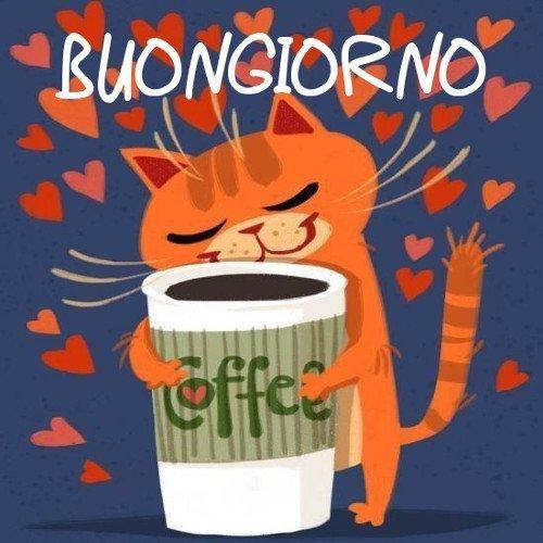Gatto caffè