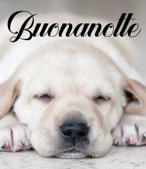 buona notte cagnolino immagini gratis WhatsApp nuove bacionotte dolci sogni