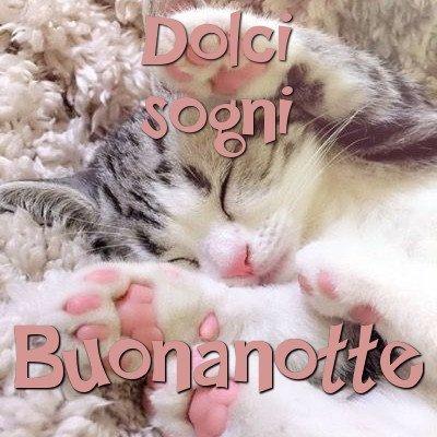 buona notte gattini immagini gratis WhatsApp nuove bacionotte dolci sogni