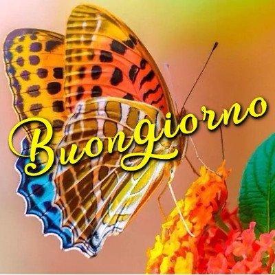 buongiorno con farfalla immagini nuove gratis whatsapp facebook