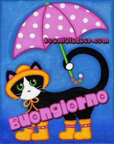 Buongiorno pioggia autunno belle e nuove immagini gatti gratis WhatsApp