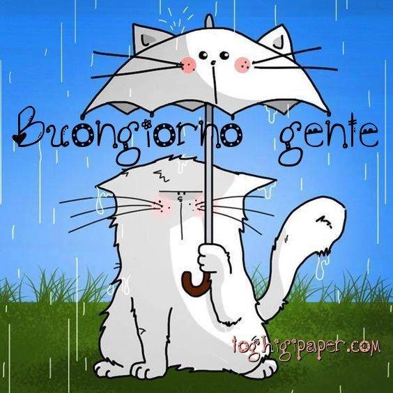 Buongiorno pioggia con gatto, nuove e bellissime immagini da scaricare gratis per Facebook e WhatsApp