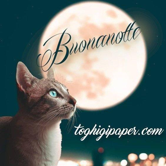 buonanotte gattini immagini gratis WhatsApp nuove bacionotte dolci sogni