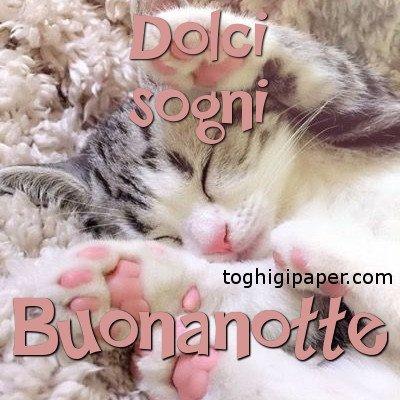 Buonanotte gatti immagini nuove gratis whatsapp facebook