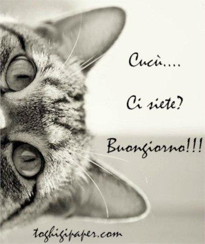 Gatti buongiorno nuove immagini gratis per Facebook, WhatsApp, Pinterest, Instagram, Twitter