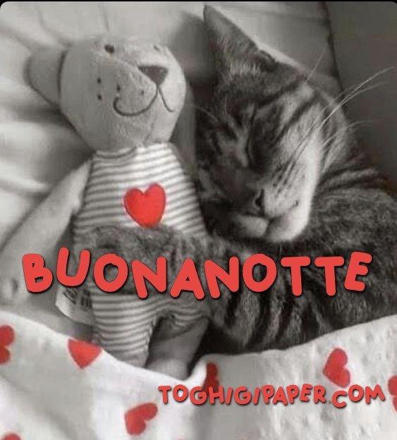 Gatti buonanotte immagini gratis WhatsApp nuove bacionotte dolci sogni per WhatsApp, Facebook, Pinterest, Instagram, Twitter