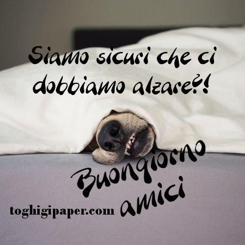 Buongiorno amici cani immagini nuove gratis WhatsApp Facebook Instagram Pinterest Twitter