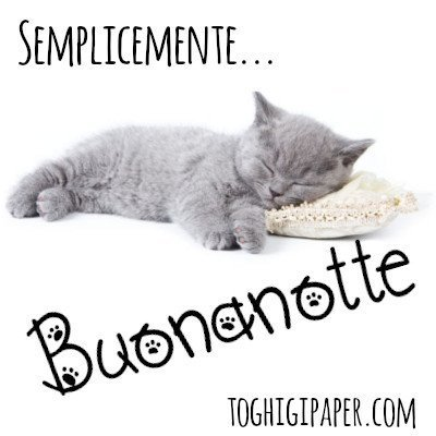 Buonanotte gatti immagini nuove gratis whatsapp facebook Instagram Pinterest