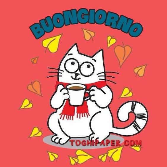 Buongiorno gatti autunno immagini nuove gratis WhatsApp Facebook Instagram Pinterest Twitter