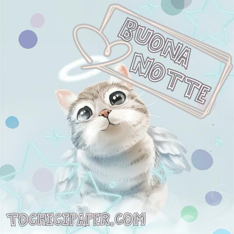 Angelo gatto buonanotte immagini gratis WhatsApp nuove bacionotte dolci sogni per WhatsApp, Facebook, Pinterest, Instagram, Twitter