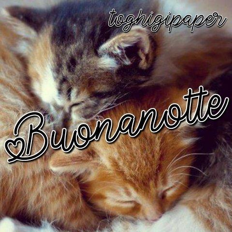 Gatti buonanotte, immagini nuove e belle da scaricare gratis e condividere con i tuoi amici su WhatsApp, Facebook, Instagram, Pinterest, Twitter
