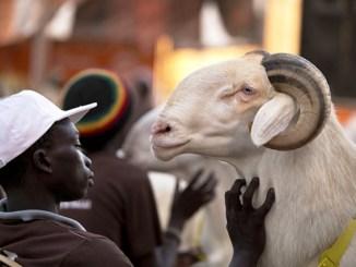 tabaskiii Togo : la Tabaski sera célébrée le 1er septembre prochain