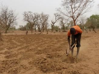 TERRES ARIDES 2,2 milliards d'hectares de terres sont infertiles au Togo